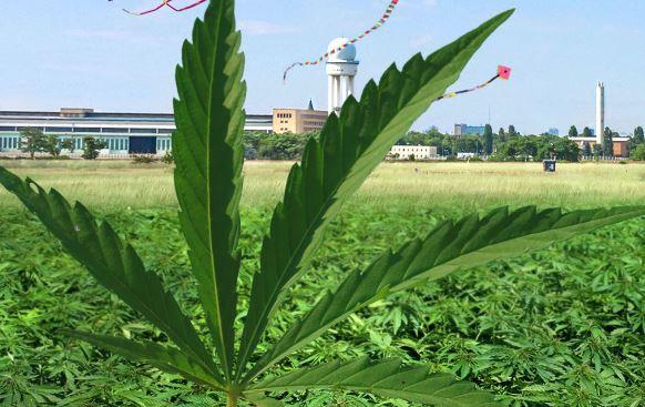 Medizinisches Cannabis reicht nicht aus